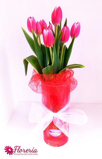 12-tulipan