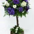 Flores a DomicilioQuillota