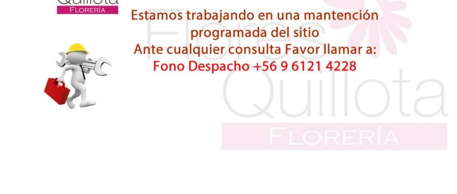flores_quillota